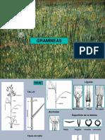 Determinacion gramineas-compuestas
