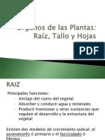 5. Órganos de las Plantas. Raiz, tallo y hojas