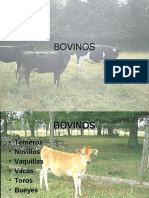 159871749-BOVINOS-de-Leche-y-Carne