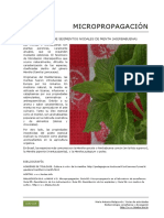 106_Micropropagacion_embriones_menta