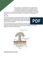 Reino Fungi e Reino Plantae