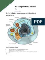 La célula sus componentes