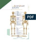 2 Esqueleto humano a saturacion oximetria reflejo popilar