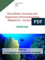 Diversidade e Evolução das briótifas