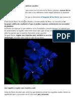 Orquídeas Azules
