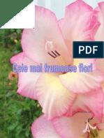 Cele Mai Frumoase Flori