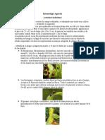 Entomología Agrícola - Plagas Del Cacao-1_9379