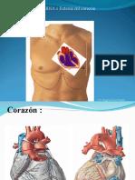 corazón clase 1 (2)