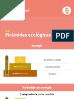 Atividade de Piramides Ecologicas