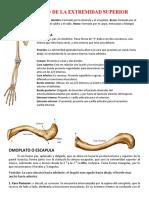 22-12-10 Esqueleto de La Extremidad Superior-kati Arias