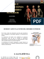 HUESOS Y ARTICULACIONES DEL MIEMBRO SUPERIOR