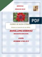 Flores de Bush Etèricas