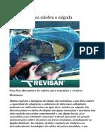 Criação de Peixes Tilápia em água salgada