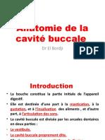 Anatomie de La Cavité Buccale