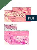 Gambaran histology
