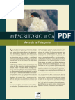 rev_107_aves_patagonia