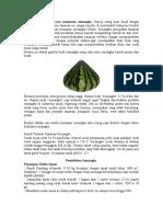 Cara Budidaya atau cara menanam semangka