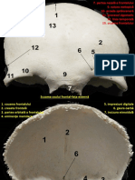imagini oasele capului