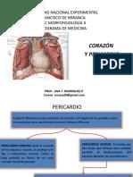 corazonypericardio-200501205927