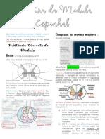 Estrutura da Medula Espinhal