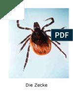 Impfen_Zecke