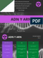 CUADRO COMPARATIVO ADN Y ARN