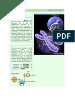 anterior cromosomas