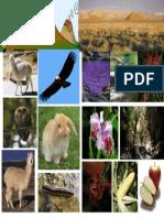 fauna y flora andina