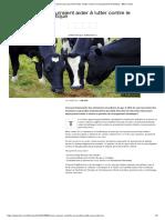Les Vaches Qui Pourraient Aider à Lutter Contre Le Changement Climatique