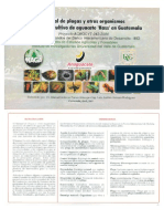Manual de plagas Aguacate