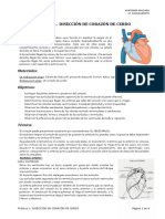 Práctica 1-Disección de un corazón de cerdo
