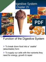 Anatomy Digestive - chap 25