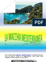 MACCHIA-MEDITERRANEA-converted