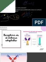 8. Receptores en el sistema adaptativo