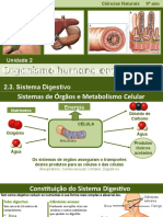 CN9 Sistema Digestivo