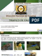 Fauna Silvestre Trafico