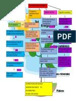 alvarezroque_BIO_5Q_U2_T1_mapas