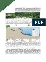 ekosistem+Padang+Lamun