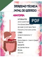 Preguntas de Anatomia INTESTINO DELGADO