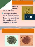 Parasitismo Intestinal 2013