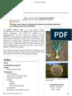 Allium Cepa - Wikipedia