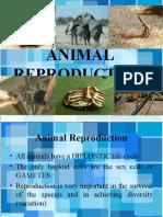 BIO 3:Animal Reproduction