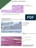 Histologia e bioquímica