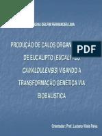 Eucalipto biobalistica