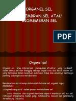 PERTEMUAN IV DAN V ORGANEL SEL MEMBRAN SEL 1