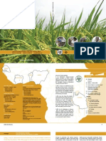 AfricaRice Annual Report 2005-2006