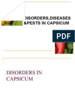 Pests and diseases of Bell pepper