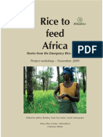 Rice to feed Africa