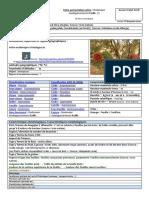 Fiche Presentation Dodonaea Madagascariensis