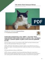 Worldanimalprotection.org.Br-FIV e FeLV Entenda Essas Duas Doenças Felinas
